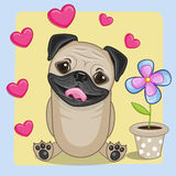 Pug Dog with heart and flower Royalty Free Stock Photos