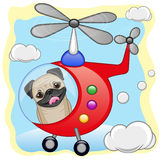 Pug Dog in helicopter Stock Image