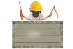 Pug dog holding pliers and screwdriver behind blank old wooden sign, isolated on white background Royalty Free Stock Photos