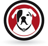 Pug dog logo Royalty Free Stock Photos