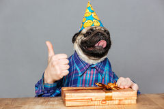 Pug dog with man hands holding gift showing thumbs up Royalty Free Stock Photography