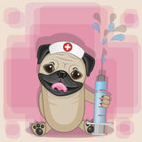 Pug Dog nurse