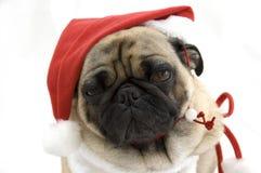Pug dog in Santa hat Royalty Free Stock Photo