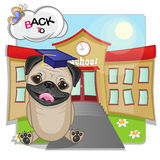 Pug Dog and school Stock Photography