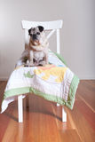 Pug dog sitting on chair. Pug dog sitting on blanket on white wooden chair. looking away royalty free stock photo