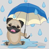 Pug Dog with umbrella Stock Photos
