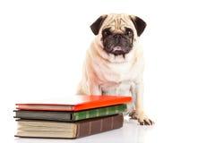 Pug dog  und books isolated on white background Royalty Free Stock Photos