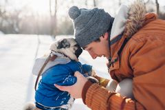 Pug dog walking on snow with his master. Puppy wearing winter coat. Man hugging his pet in winter forest. Clothes for animals stock photography