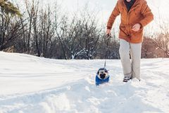 Pug dog walking on snow with his master. Puppy wearing winter coat. Clothes for animals royalty free stock photography