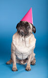 Pug dog wearing birthday hat Royalty Free Stock Photo