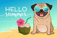 Pug dog wearing reflective sunglasses on a sandy beach, ocean in. Background, green coconut drink, Hello Summer text. Funny humorous lifestyle, tropical vector illustration