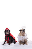 Pug dogs in angel and devil costumes. Two Pug dogs, a fawn and a black, dressed in an angel & a devil costumes stock photos