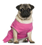 Pug dressed in pink, 7 months old Royalty Free Stock Photography