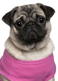 Pug dressed in pink, 7 months old Stock Images