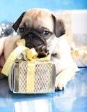Pug en de giften van het puppy Stock Foto's