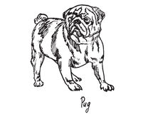 Pug. Hand drawn doodle, sketch in pop art style, vector, Pug Royalty Free Stock Photos