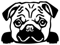 Pug head. Black and white royalty free illustration