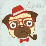 Pug hipster smoking pipe Stock Photography