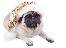 Pug hond Stock Foto