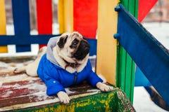Pug hond in de winterkleren die op speelplaats in openlucht zitten Huisdier die op bevel wachten stock afbeelding