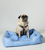Pug Hond die omhoog eruit ziet royalty-vrije stock fotografie
