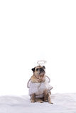 Pug hond in engelenkostuum Stock Afbeelding