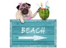 pug hond met blauwe uitstekende houten strandteken en watermeloencocktail, die op witte achtergrond wordt geïsoleerd Royalty-vrije Stock Afbeeldingen