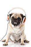 Pug hond met hoofdtelefoon op witte achtergrondmuziek wordt geïsoleerd die royalty-vrije stock afbeeldingen