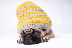 Pug, Hund auf weißem Hintergrund Netter freundlicher fetter molliger Pugwelpe Haustiere, Hundeliebhaber, lokalisiert auf Weiß stockbild