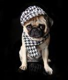 Pug Lola Stock Photo