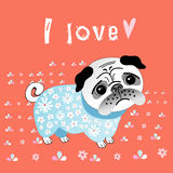 Pug lover Stock Photo