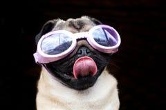 Pug met beschermende brillen royalty-vrije stock foto