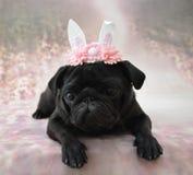 Pug met konijntjesoren royalty-vrije stock afbeeldingen