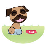 Pug in pant Stock Images