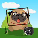 Pug photographer, invites you to take photographs Stock Photography