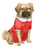 Pug portrait, mops girl, cutie -dog in a cute red dress. A Pug portrait, mops girl, cutie pug-dog in a cute red dress Stock Photo