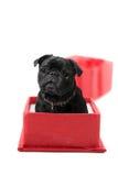 Pug Present Royalty Free Stock Image