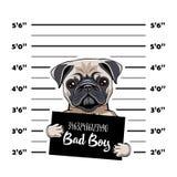 Pug prisoner. Arrest photo. Police placard, Police mugshot, lineup. Police department banner. Dog criminal. Pug offender. Vector. Pug prisoner. Arrest photo Stock Images
