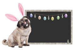 Pug puppy dog with bunny ears diadem sitting next to blank blackboard sign with easter decoration, on white background. Cute pug puppy dog with bunny ears diadem Royalty Free Stock Image