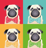 Pug Puppy dog friend animal Stock Image