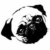 Pug Puppy Dog Portrait Black and White Vector Stock Photos