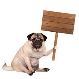 Pug puppy dog sitting down with blank wooden sign on pole, isolated on white background Royalty Free Stock Photography