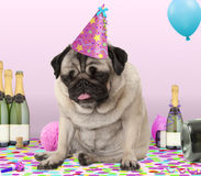 Pug puppy dog wearing party hat, lying down on confetti, drunk on champagne with hangover, Royalty Free Stock Photo