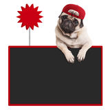 Pug puppy dog wearing red cap, hanging with paws on blank blackboard with sale sign