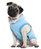 Pug puppy gekleed in blauwe hoodie, 6 maanden oud Royalty-vrije Stock Afbeelding
