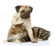 Pug puppy hugs a cat. Stock Image