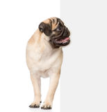 Pug puppy peeking from behind empty board. isolated on white Stock Photo
