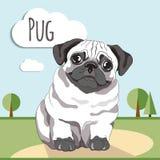 Pug puppy. Pug-dog on white background. Greeting card vector illustration