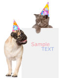 Pug puppy and small kitten in birthday hats above white banner. Space for text. isolated on white. Background Stock Photo