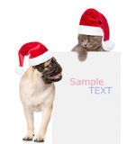 Pug puppy and small kitten with red Santa Claus hats above white Stock Photography